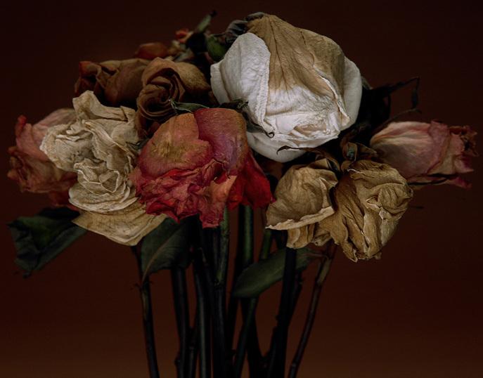 Natura morta - Carlos domenech ...